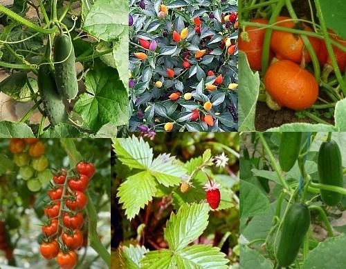 Bio lieferservice gr ner bote witzenhausen regionale for Pflanzen lieferservice